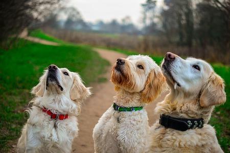 honden belonen