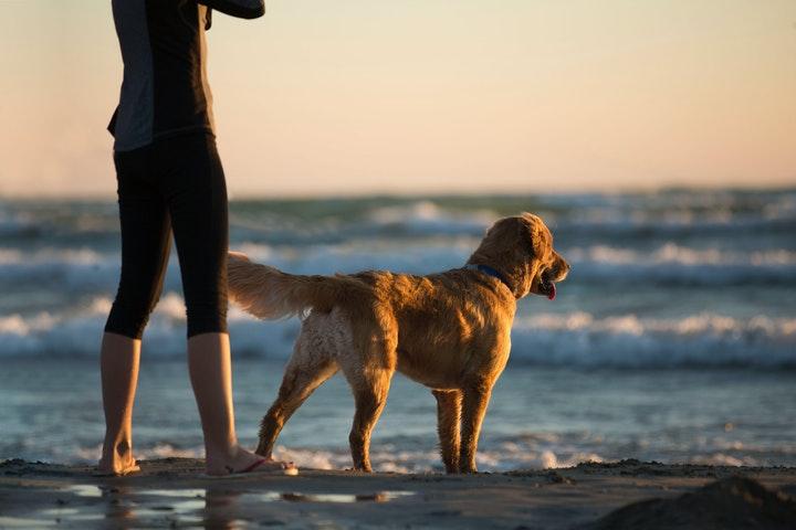 Hond Koelen