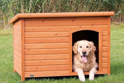 hondenhok golden retriever